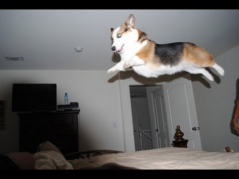 Animals Defying Gravity!