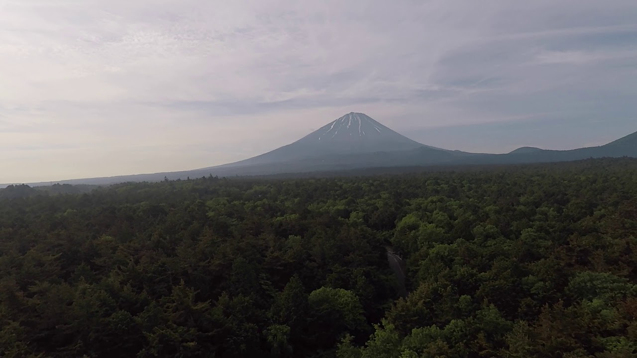 Aokigahara by Drone