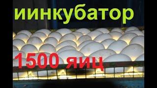 Инкубатор на 1500 яиц за 10 000 руб ЧАСТЬ 1