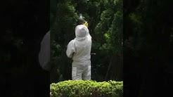 Bees & Wasp Nest removal in NJ