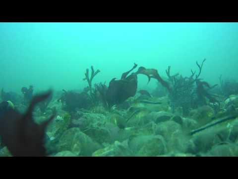 Produced Biological Studies C reef