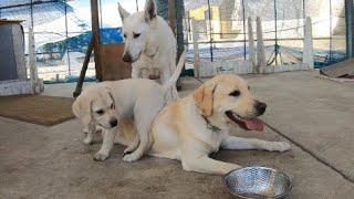 最初はゴンのトレーニング、その後はいつもの他犬と交流。 サンはホワイ...