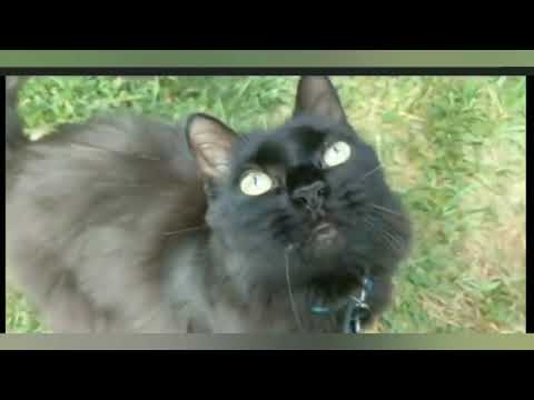 pet-loss---my-cat-died-&-i-miss-him---straight-talk-about-the-grief-i'm-feeling
