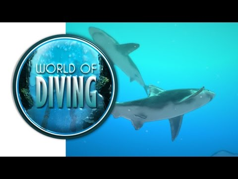 World of diving (fin)