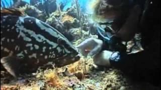 Colores del mar 1 Ilusion Ojo de pez