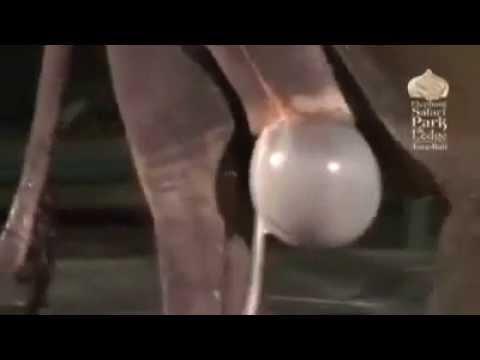 Как размножаются опоссумы