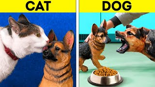 CAT VS. DOG || Cute And Useful Pet Hacks, DIY Crafts And To See Real Difference Between Them