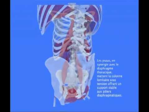 El diafragma, anatomía, importancia y funciones | Fisioterapia Online