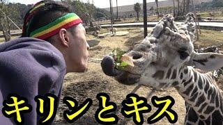 キリンとキスしたらまさかの展開に…【動物園ロケ】