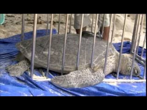 Discovery Channel Documentary Animal Planet National Geographic Wild #19