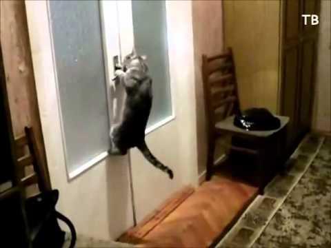 кот подрал входную мягкую дверь термогольфы