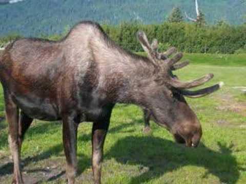 Eielson AFB Alaska