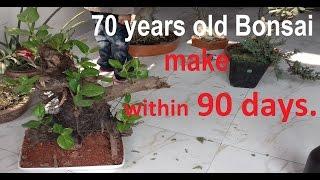 How to make a Bonsai tree|Bonsai Starter kit | Bonsai tree at home.-part 1.