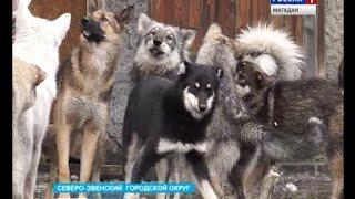 9 питомников для бездомных животных построят на Колыме