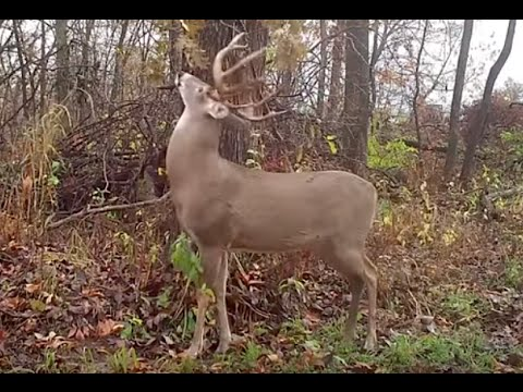 Adjust Your Deer Hunting Tactics to Beat Father Time