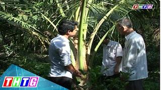 Cây lành trái ngọt: Mô hình trồng dừa sáp