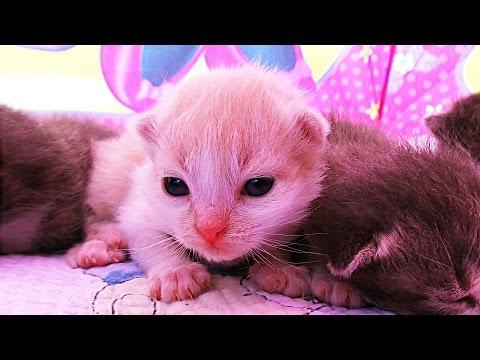 ✿ КОШКА РОДИЛА 5 КОТЯТ!!! Тент Minnie Mouse от JOHN Видео Для Детей Play with cat funny cats video