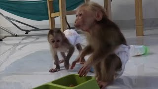 Afternoon of GON monkey family