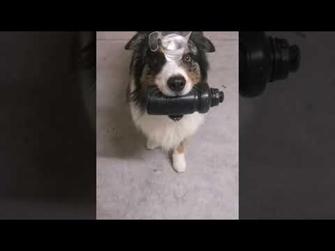 One Talented Pooch || ViralHog