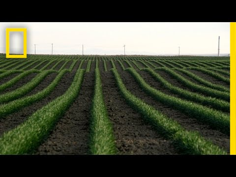 Drones and the Future of Farming | National Geographic