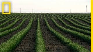 Drones and the Future of Farming   National Geographic