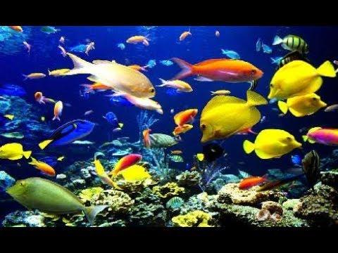 Rahatlatıcı Akvaryum Balıkları Videosu (30 dakika)