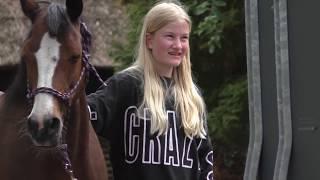 Gambar cover Pferd steigt im Anhänger Verladetraining für Problempferde Pferd Verladen Anhängertraining