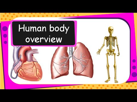 Science - Human Body Introduction (Our body parts, organs and health ...