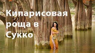 Кипарисовая роща