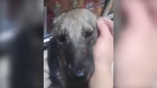 Abused Dog Feels For the First Time Petting Instead of Abusing