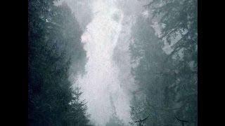 Thrawsunblat - She, Arboreal (Acoustic)
