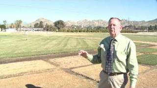 How to Grow Grass : How to Grow Bermuda Grass From Seed
