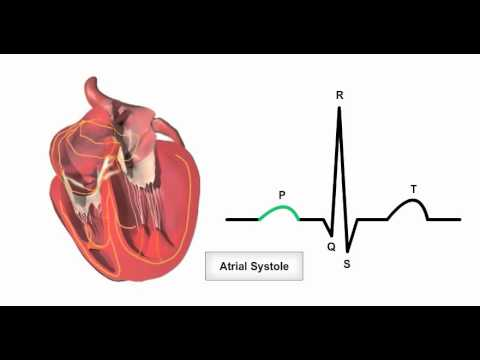 Anatomy & Physiology Online - Cardiac conduction system and its ...