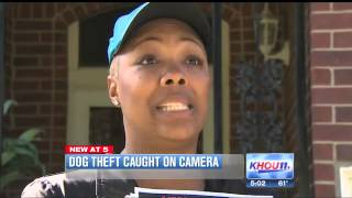 Caught on camera: Woman steals pet dog from yard