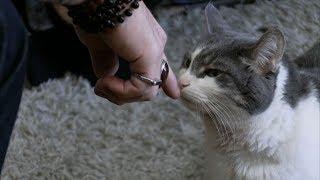 Раскрыта главная опасность кошек для человека