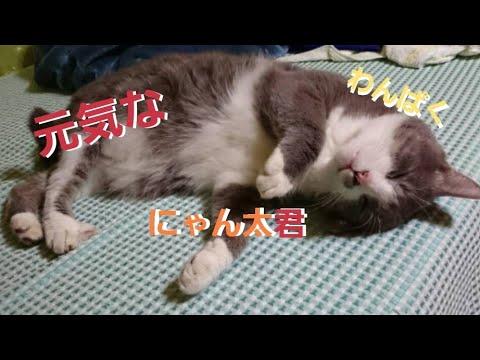 猫☆ニャン太君★画像集①