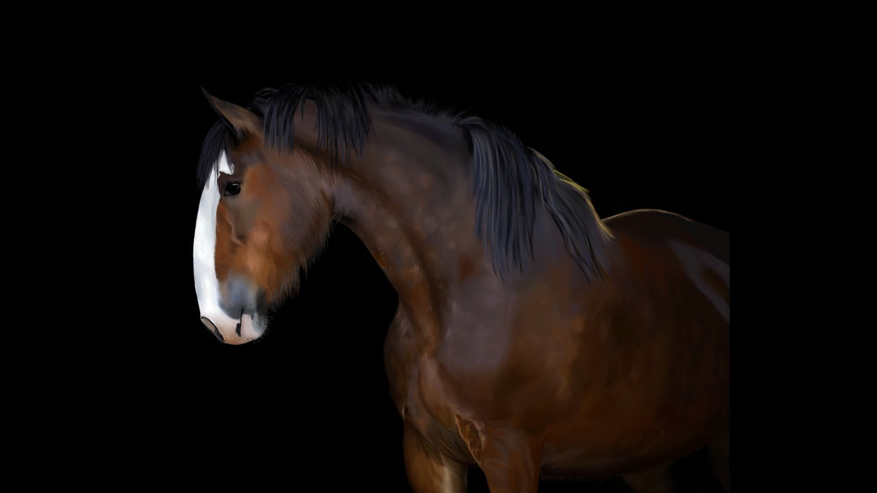 How to Draw a Realistic Horse portrait - digital painting ...