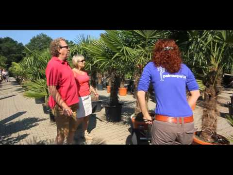 Ficus lyrata from YouTube · Duration:  40 seconds