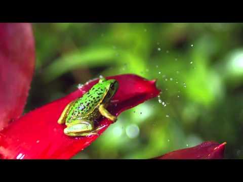 Samsung Demo Video  (Display Auflösung Test) 720p [HD]