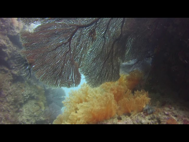 Golden Coral video by Laura Tolbird