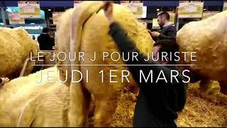 Le jour J pour Juriste, le taureau de Lucenay