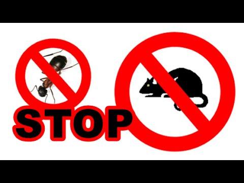 Bunyi untuk menakutkan tikus, anjing, nyamuk, pepijat