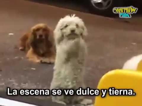La triste historia detrás de los perros que aprendieron a pedir comida