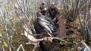 """Cacería de Alce """"Moose"""" en Canadá para Grandes Trofeos del 12 de Agosto"""