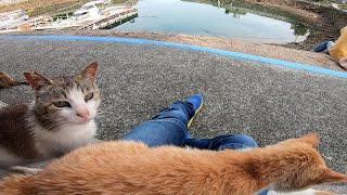 野良猫がたくさん寝転んでいる所に座ったら猫が次々に膝の上に乗ってきた