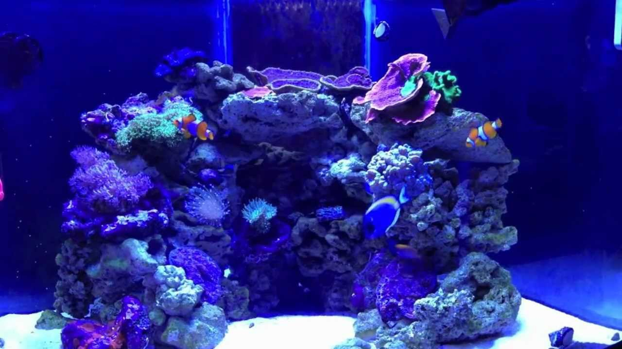 Andrew S Reef 54 Gallon Corner Reef Pt2 Youtube