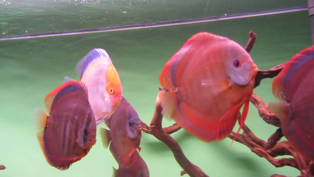 Color Discus - YouTube
