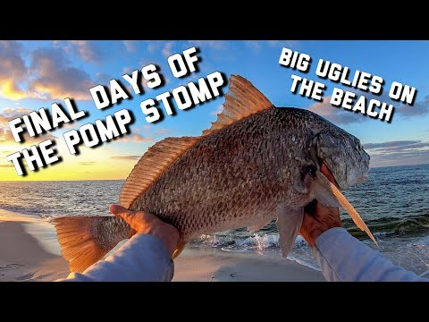 BIG FISH Catch From A Public Beach | Surf Fishing For Pompano
