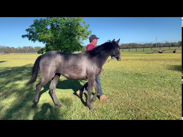 Cottoned On x Frosted 20 Filly (28.09.20)
