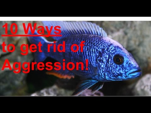 10 TIPS TO REDUCE CICHLID AGGRESSION